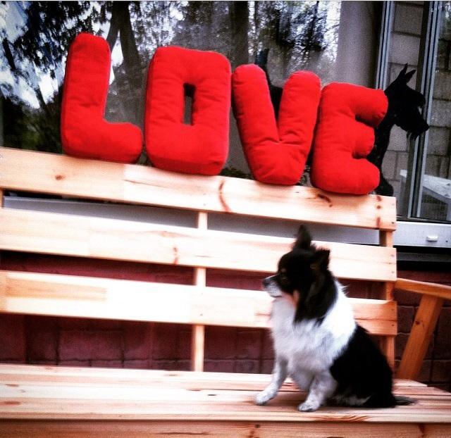 Стрижка чихуа хуа - это радость и для нас, и для самой жизнерадостной собачки