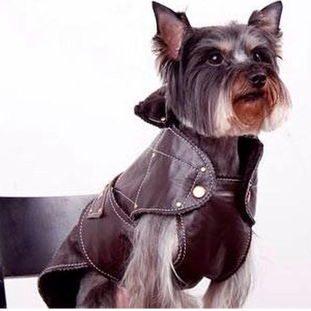 Груминг йорка - это целая философия жизни, иногда собака претерпевает чудесные превращения стиля