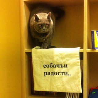 Стрижка британских кошек в салоне Ричи - это грамотный уход, внимательность и ответственность персонала, компетентность мастеров