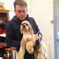 Стрижка спаниеля помогает избавиться от проблем со здоровьем собаки