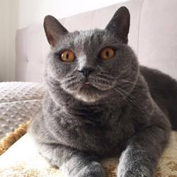Стрижка кошек, Москва