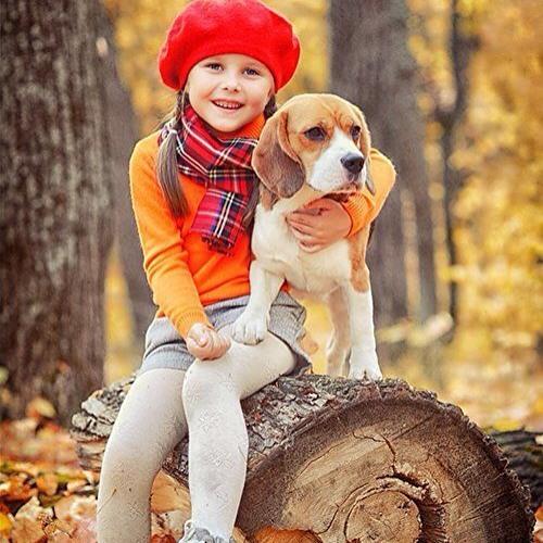 Стрижка бигля - процедура не обязательная, однако даже при выставочном груминге некоторые владельцы собаки предпочитают состригать лишнюю шерсть