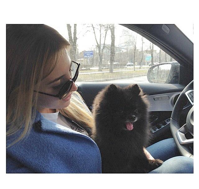 Стрижка шпица на ленинском проспекте осущетсвляется в зоосалоне для собак Ричи