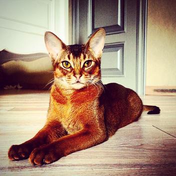 Креативные стрижки кошек пользуются популярностью в нашем салоне, ведь породистые питомцы нуждаются в создании имиджа