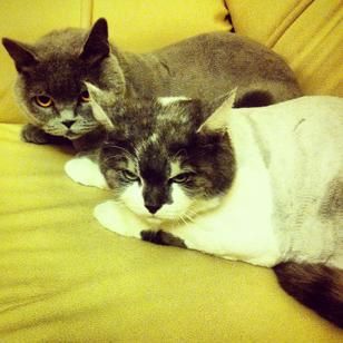 Стрижка когтей у кошки - вопрос деликатный. Нужно обладать специальными знаниями и навыками, чтобы не принести вред домашнему животному