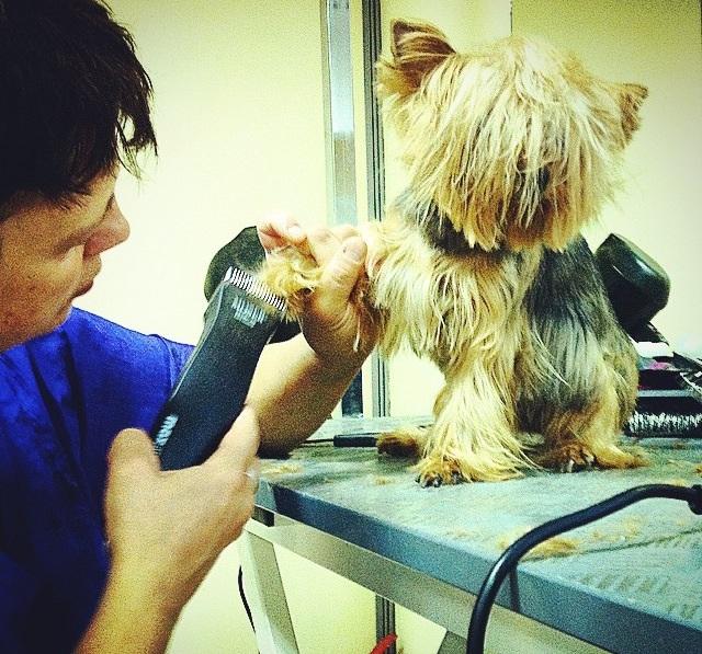 Чистка зубов у собак - это далеко не самая приятная процедура, но она важна для здоровья Вашего питомца